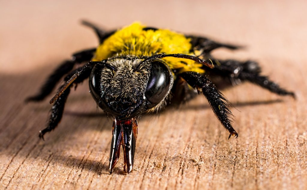 5 insect-278083_1920