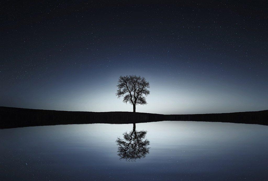 2 tree-736881_1280